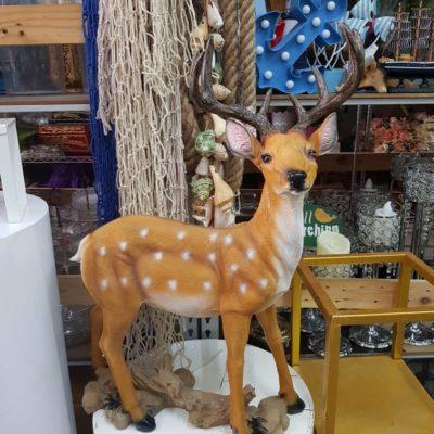 Deer / Rusa